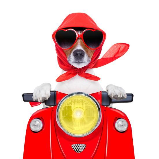Motorcycle Dog Summer Dog-Javier Brosch-Photographic Print