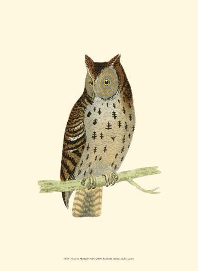 Mottled Owl-Reverend Francis O^ Morris-Art Print
