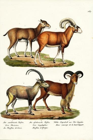Mouflon, 1824-Karl Joseph Brodtmann-Giclee Print