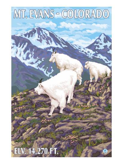 Mount Evans, Colorado, Mountain Goat Family-Lantern Press-Art Print