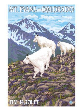 https://imgc.artprintimages.com/img/print/mount-evans-colorado-mountain-goat-family_u-l-q1gokn30.jpg?p=0