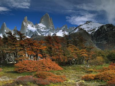 Mount Fitzroy and Lenga Beech (Nothofagus Pumilio) Trees, Los Glaciares National Park, Argentina-Colin Monteath/Minden Pictures-Photographic Print