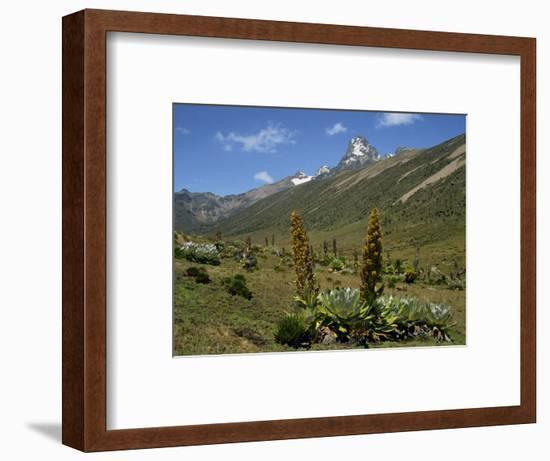 Mount Kenya, with Giant Lobelia in Foreground, Kenya, East Africa, Africa-Poole David-Framed Photographic Print