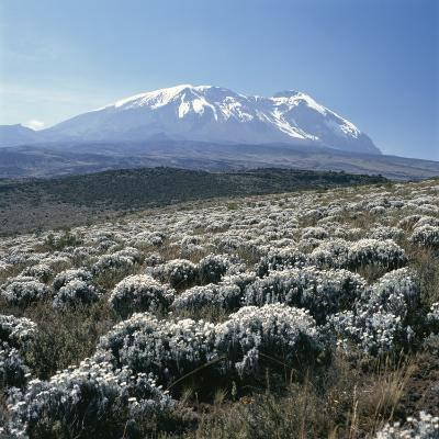 Mount Kilimanjaro, the Breach Wall, as Seen From Shira Plateau-David Pluth-Photographic Print