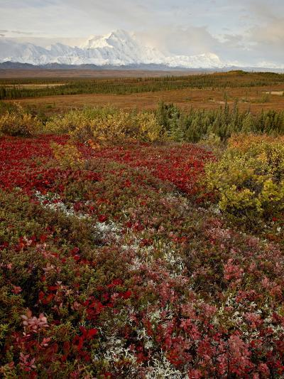 Mount Mckinley With Tundra in Fall Color, Denali National Park and Preserve, Alaska, USA-James Hager-Photographic Print