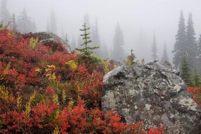 Mount Rainier National Park, Autumn Fog-Ken Archer-Photographic Print