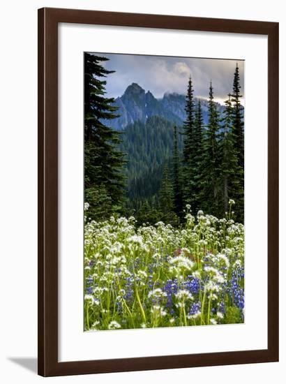 Mount Rainier National Park, Washington: Wildflowers Along The Paradise River Trail-Ian Shive-Framed Photographic Print
