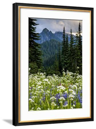 Mount Rainier National Park, Washington: Wildflowers Along The Paradise River Trail-Ian Shive-Framed Photographic Print