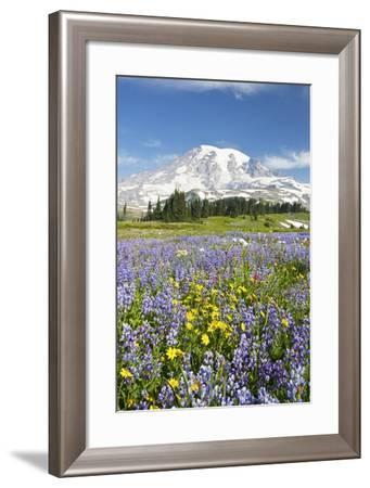 Mount Rainier National Park-Design Pics Inc-Framed Photographic Print