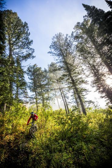 Mountain Biker Descends The Parallel Trail On Teton Pass Near Wilson, Wyoming-Jay Goodrich-Photographic Print
