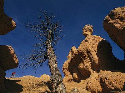https://imgc.artprintimages.com/img/print/mountain-biking-through-rock-formations-in-the-dixie-national-forest_u-l-p4mvio0.jpg?p=0
