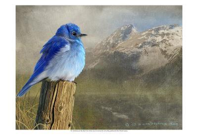 Mountain Blue Bird-Chris Vest-Art Print