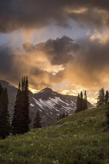 Mountain Evergreens-Dan Ballard-Photographic Print