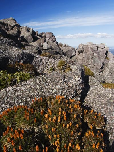 Mountain Flowers, Black Bluff, Tasmania, Australia, Pacific-Kober Christian-Photographic Print