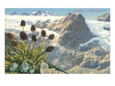 Mountain Flowers, Swiss Alps--Art Print
