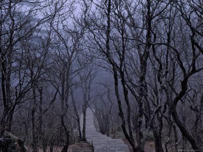 Mountain Forest Path, Mt. Huangshan (Yellow Mountain), China-Keren Su-Photographic Print