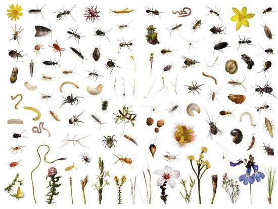 Mountain fynbos species collected within a one cubic foot metal cube.-David Liittschwager-Photographic Print