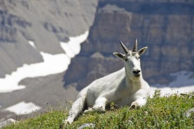Mountain Goat, Mount Timpanogos Wilderness, Wasatch Mountains, Utah-Howie Garber-Photographic Print