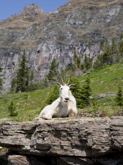 Mountain Goat on Rock, Logan Pass, Glacier National Park, Montana, USA-Jamie & Judy Wild-Photographic Print
