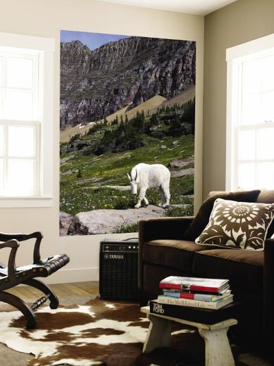 Mountain Goat (Oreamnos Americanus)-Mark Newman-Wall Mural