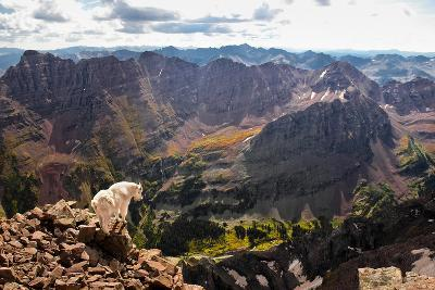 Mountain Goat Stands at the Edge of Bouldery Cliff at the Maroon Bells in Colorado-Kent Harvey-Photographic Print