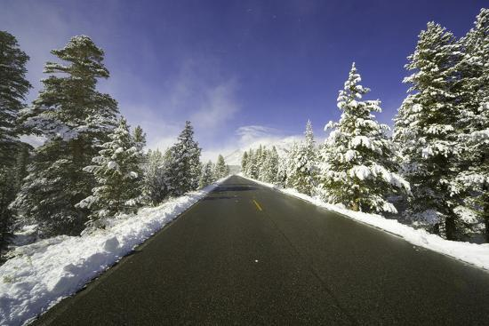 Mountain Highway among Snowy Trees in Inyo National Forest-Momatiuk - Eastcott-Photographic Print