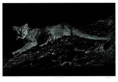 Mountain Lion-Robert Pow-Limited Edition
