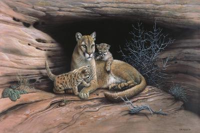 Mountain Lions-Harro Maass-Giclee Print
