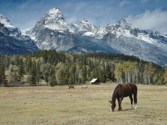 Mountain Looms High as Horses Graze-Jeff Foott-Photographic Print
