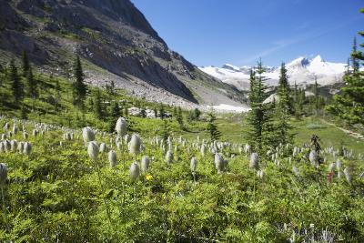 Mountain Meadow with Wildflowers and Glacier Mountains-Design Pics Inc-Photographic Print