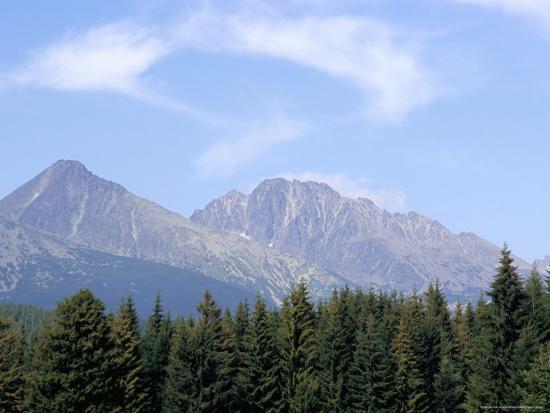 Mountain Pines, Vysoke Tatry Mountains, Vysoke Tatry, Slovakia-Richard Nebesky-Photographic Print