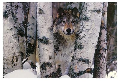 Mountain Ranger-Art Wolfe-Art Print