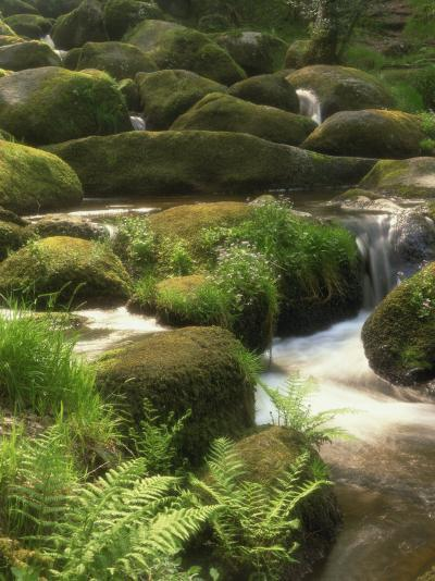 Mountain Stream Cascades over Rocks Covered with Mosses, Ferns and Flowers in Scotland, UK--Photographic Print