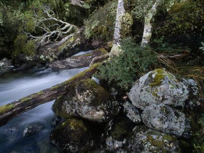 Mountain Stream Flows Through a Rain-Drenched Southern Beech Forest-Gordon Wiltsie-Photographic Print