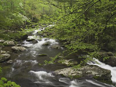 Mountain Stream in Early Spring, Great Smoky Mountains National Park, Tennessee-Adam Jones-Photographic Print