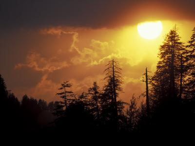 Mountain-top Trees Silhouetted at Sunset, Great Smoky Mountains National Park, Tennessee, USA-Adam Jones-Photographic Print