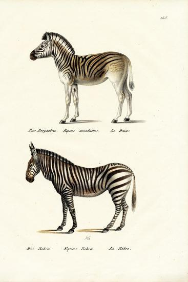 Mountain Zebra, 1824-Karl Joseph Brodtmann-Giclee Print