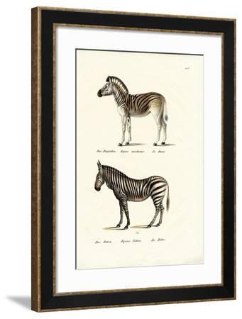 Mountain Zebra, 1824-Karl Joseph Brodtmann-Framed Giclee Print