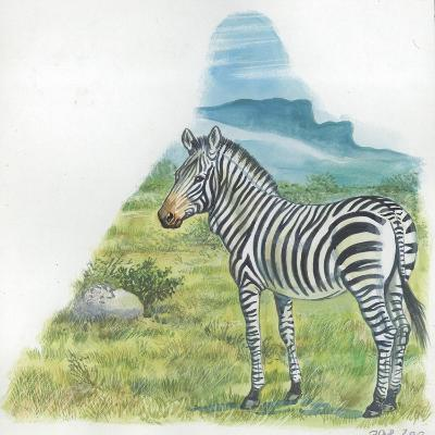 Mountain Zebra Equus Zebra--Giclee Print