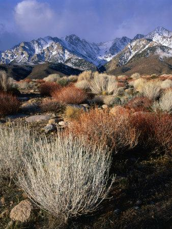 Mountains and Desert Flora in the Owens Valley, Inyo National Forest, California, USA-Wes Walker-Photographic Print