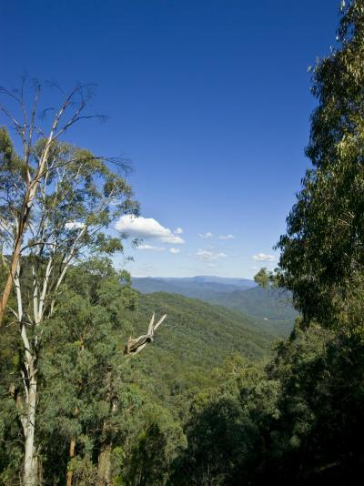 Mountains Covered in Dense Eucalyptus Forests Roll into the Distance-Jason Edwards-Photographic Print