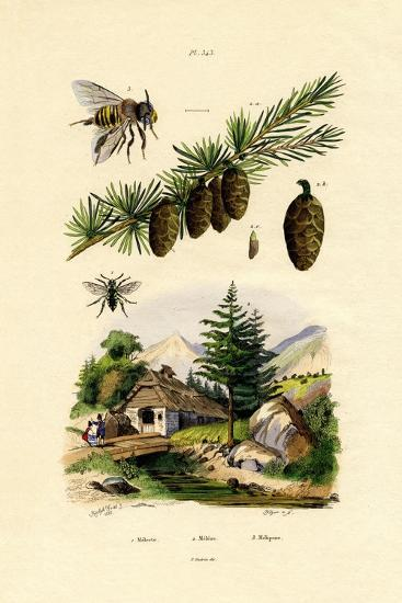 Mourning Bee, 1833-39--Giclee Print