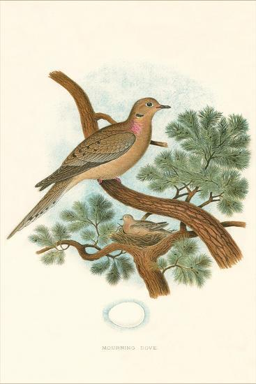 Mourning Dove Nest and Eggs--Art Print
