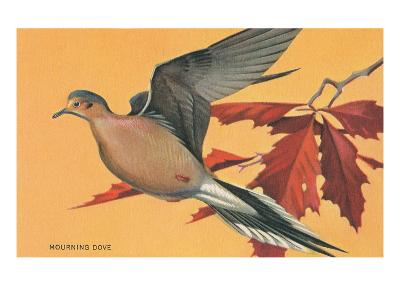 Mourning Dove--Art Print