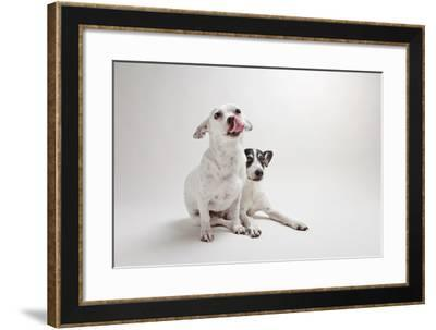 Mouse and Jack-Susan Sabo-Framed Photographic Print