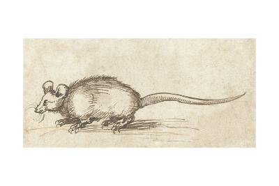 Mouse, C. 1480-1520-Albrecht Durer-Giclee Print