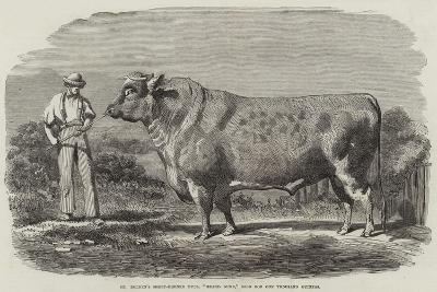 Mr Bolden's Short-Horned Bull, Grand Duke, Sold for One Thousand Guineas--Giclee Print