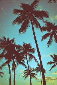 Vintage Tropical Palms by Mr Doomits