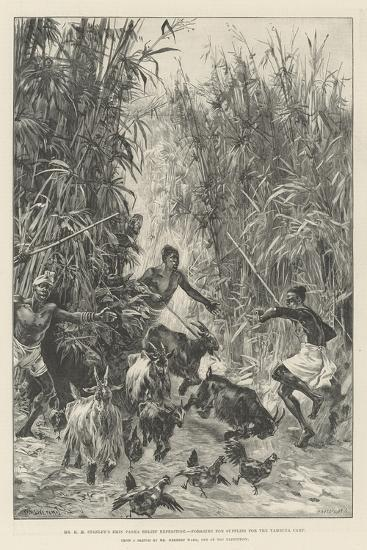 Mr H M Stanley's Emin Pasha Relief Expedition, Foraging for Supplies for the Yambuya Camp-William Heysham Overend-Giclee Print