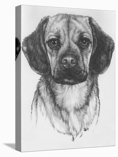 Mr. Puggle-Barbara Keith-Stretched Canvas Print